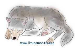 'The Gray Dog crouched', illustration by Andrea F. Phillips